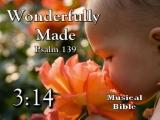 Wonderfully Made - Baby Dedication CD