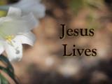 Jesus Lives - Easter