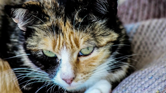 2018 arctic cat wildcat