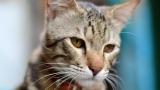 Cats Talk ATTITUDES