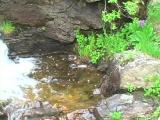 Colorado Water Falls 2