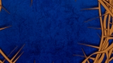 Blue Thorns Still1