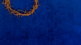 Blue Thorns Still2