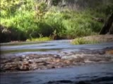 Mountain River: Living Water