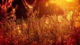 Autumn Plants And Sunlight