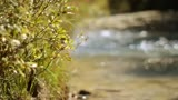 River Bank Nature Background