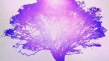Tree Of Life Purple 1 Still