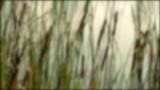 Reeds Loop (Blurred)