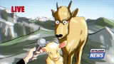 Bethlehem Goats Interview