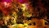 The Garden of Gethsemane II