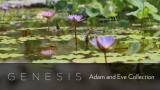 Genesis: Adam and Eve Collection