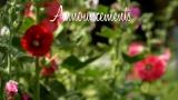 Blossom Breeze Announcements Still