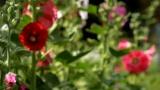 Blossom Breeze Still