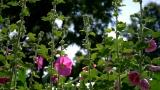 Blossoms Still