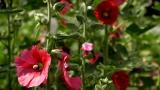 Bug In Bloom Still