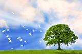 Healing Background Loop