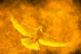Holy Spirit Fire Background