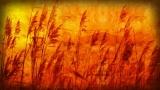 Autumn Background 3
