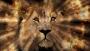 Lion of Judah Background