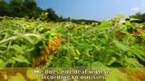 Psalm 103: Sunflowers