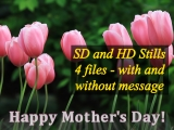 Mother's Day Pink Tulips Still Collection - SD & HD stills