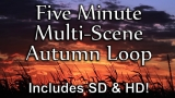 Awesome Autumn Long Play Loop - SD & HD included!
