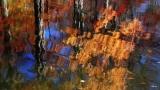 Brilliant Autumn Reflection - HD & SD loops
