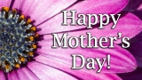 Happy Mother's Day African Daisy - SD & HD stills