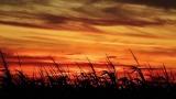Sundown Maize Silhouette Loop - SD & HD included!