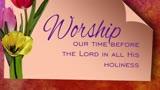 Tulip2 Worship1