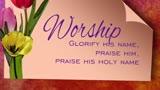 Tulip2 Worship2