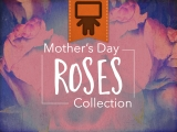 Mother's Day Roses Collection