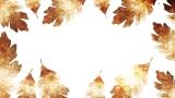 Thanksgiving Crisp Leaves 1 Still