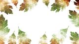 Thanksgiving Crisp Leaves 5 Still