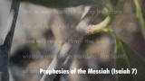 Prophecies of the Messiah (Isaiah 11)