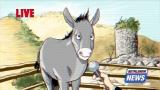 Bethlehem Donkey Interview