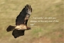 Flying Hawk, Collection