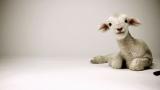 Good Friday Lamb
