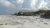 Breezy Seaside