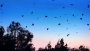 0 (HD) Gorgeous Sunset with Brids Soaring Overhead