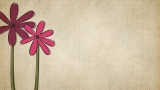 2 Pink and Purple Flower Backgrounds
